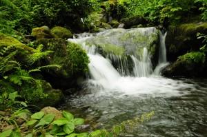 Georgien Adscharien Mtirala National Park