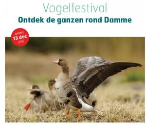 fotovogelfestival